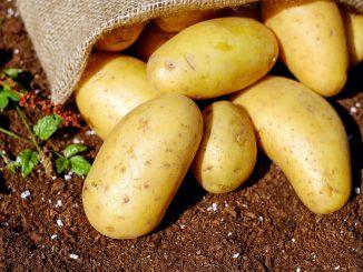 Allergie alla patata