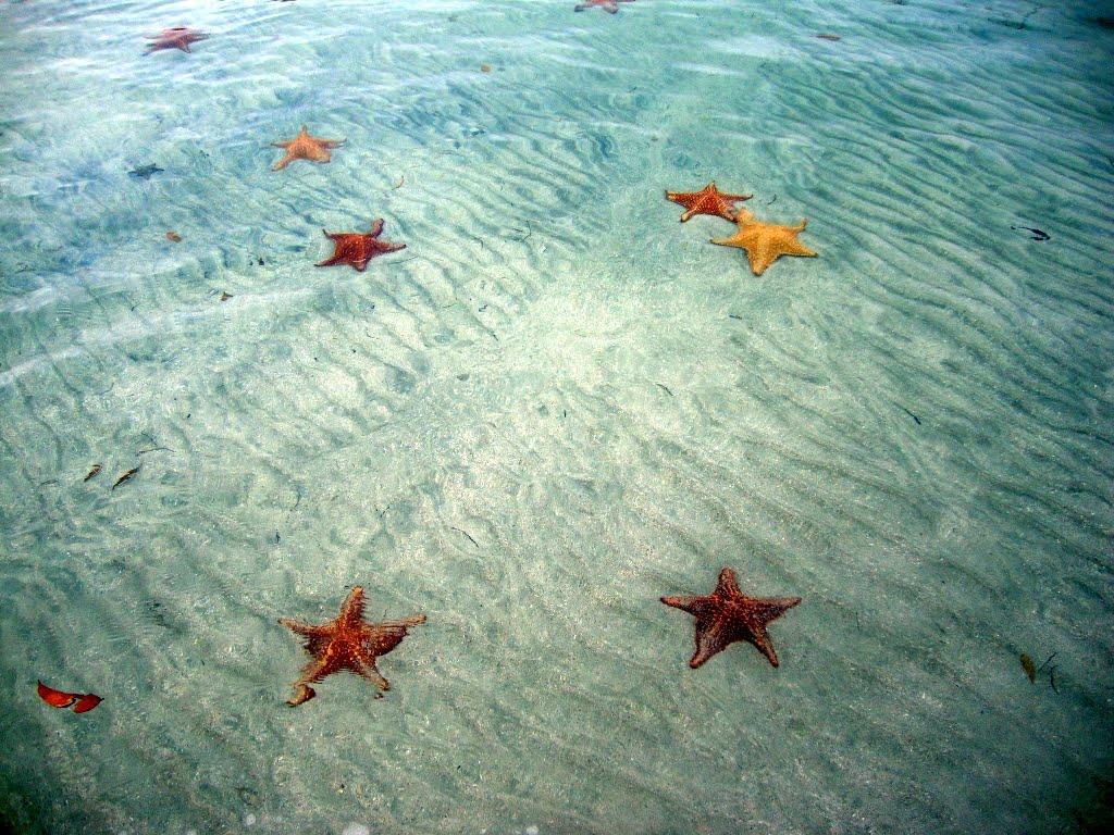 Play de Estrelas