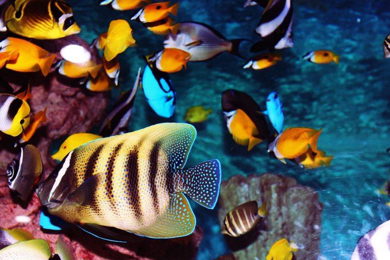 I pesci tropicali