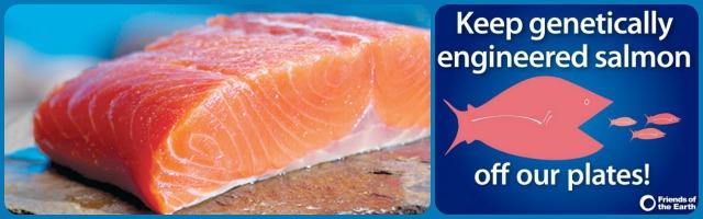 20131023 salmone ogm campagna ambientalisti