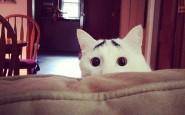 gatti particolari