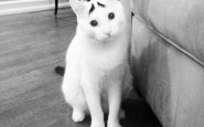 Il gatto con le sopracciglia
