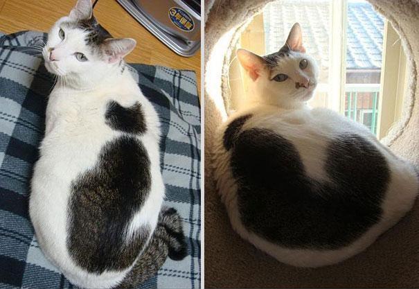 gatti particolari10