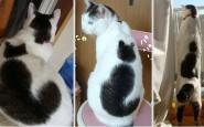 Il gatto con il gatto sulla schiena