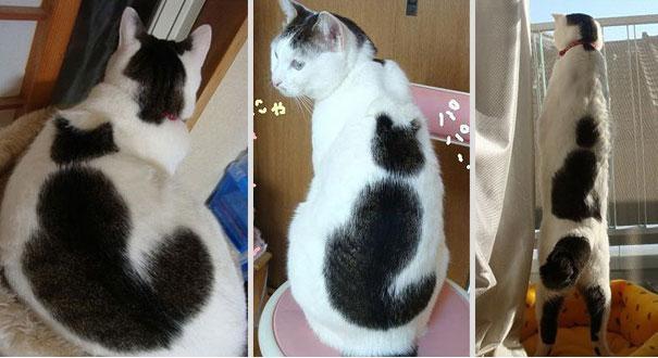 gatti particolari11