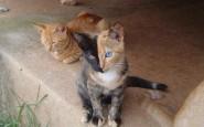 Il gatto a due facce
