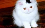 Il gatto con un cilindro in testa!