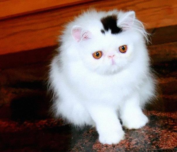 gatti particolari3