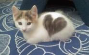 gatti particolari4