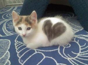 Il gatto con il cuore