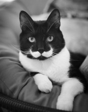 Il gatto con i baffi bianchi