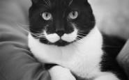 gatti particolari5