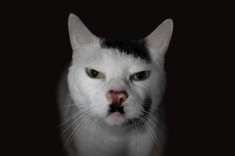 Adolf il gatto