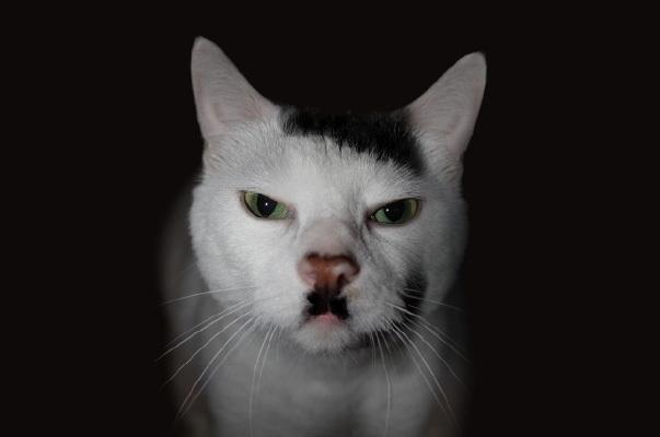 gatti particolari6