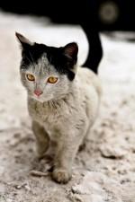 il gatto con la riga in mezzo