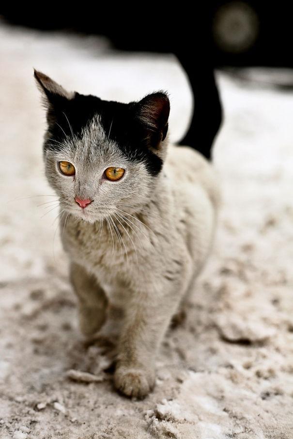 gatti particolari7