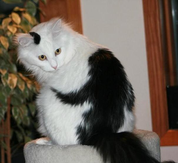 gatti particolari9