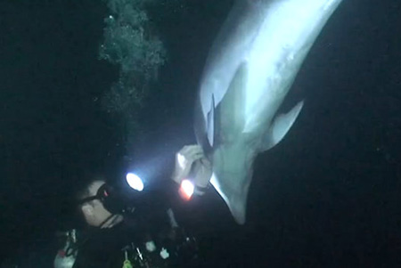 intelligent dolphin rescue