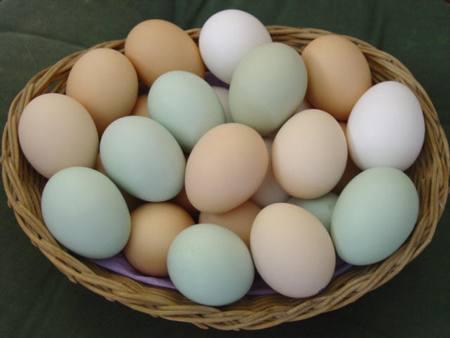 uovo di gallina calorie