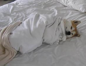 wont-change-bed-dog