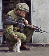 80 soldiercat