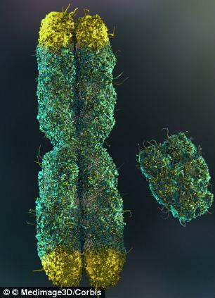 Le-sostanze-influenzano-la-lunghezza-dei-telomeri-