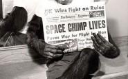 Uno_Scimpanz_Astronauta_posa_per_le_fotocamere_dopo_una_missione_di_successo_nello_spazio_1961