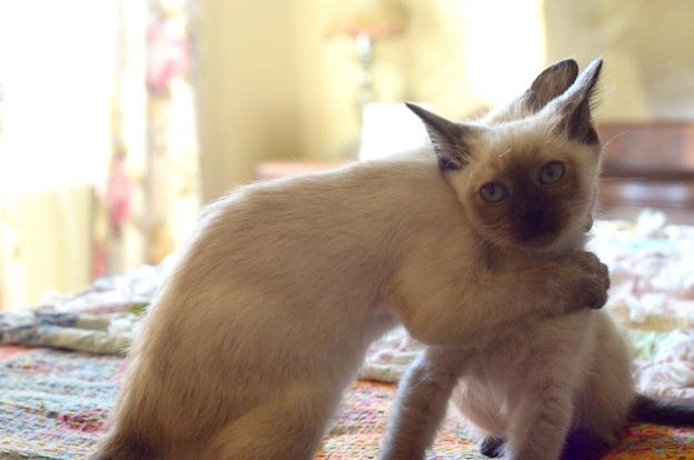 abbracci-tra-gatti