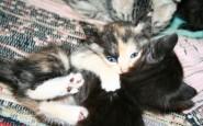 abbracci-tra-gatti10