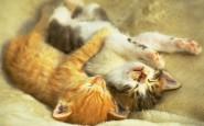 abbracci-tra-gatti1