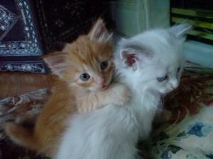 abbracci-tra-gatti11