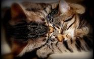 abbracci-tra-gatti12