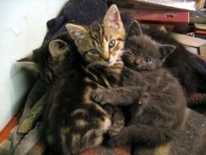 abbracci-tra-gatti13