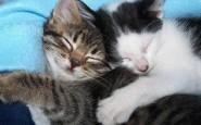 abbracci-tra-gatti15