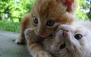 abbracci-tra-gatti16