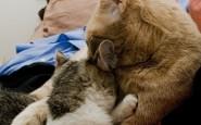 abbracci-tra-gatti17