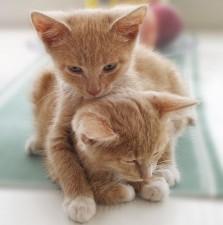 abbracci-tra-gatti18