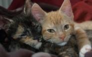 abbracci-tra-gatti19