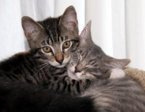 abbracci-tra-gatti2