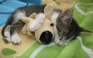 abbracci-tra-gatti3