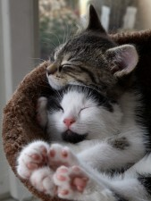 abbracci-tra-gatti4