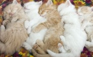abbracci-tra-gatti5