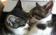 abbracci-tra-gatti6