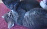 abbracci-tra-gatti7