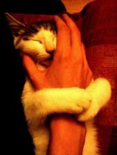 abbracci-tra-gatti8