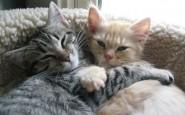 abbracci-tra-gatti9