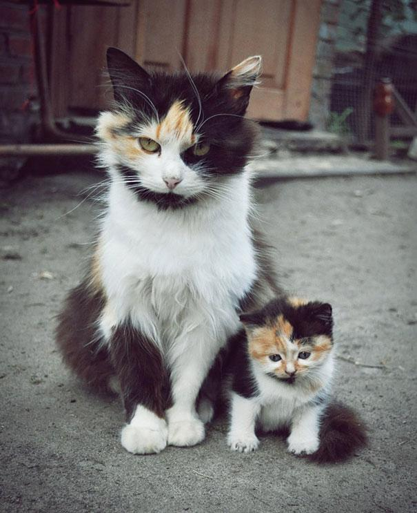 animals with miniature versions of themselves 1