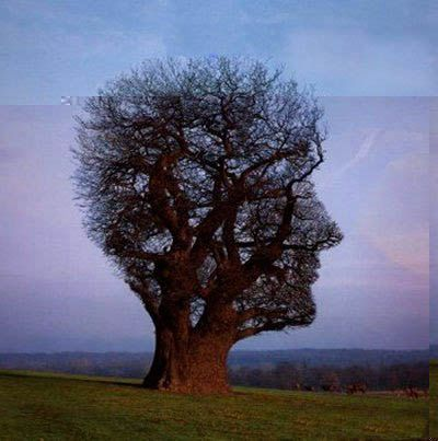 facetree