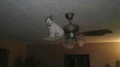 gatti-matti1