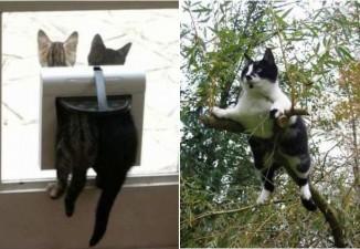 gatti-matti7